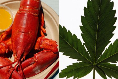 Maine restaurant sedating lobsters with marijuana to ease the pain of cooking