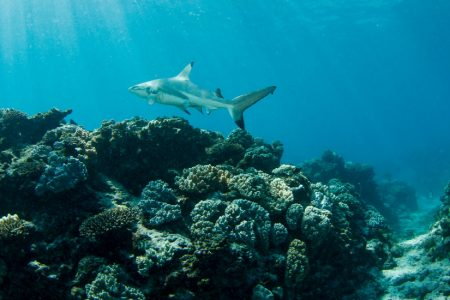 Australia's Other Great (and Threatened) Coral Reefs