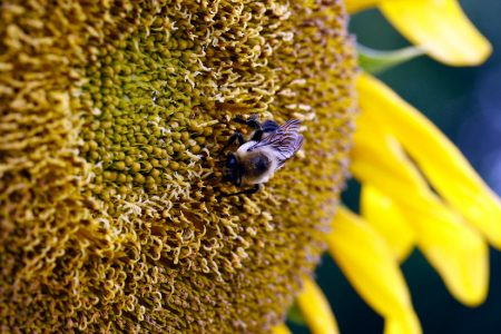 The Moon Eclipsed the Sun. Then the Bees Stopped Buzzing.