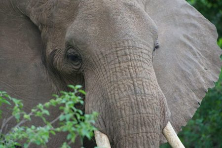 Scientists Solve Mystery of the Cracks In Elephant Skin