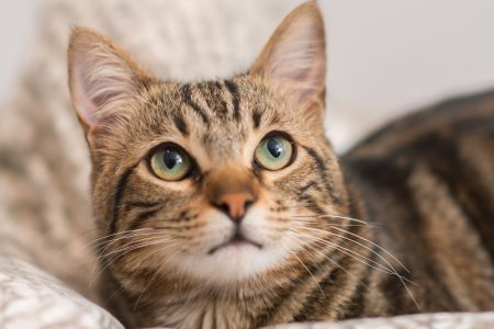 US Embassy In Australia Apologizes For Cat Pajama Party Invite