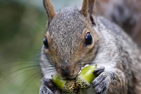New York Hunter Likely Died From Eating Squirrel Brains, Researchers Reveal