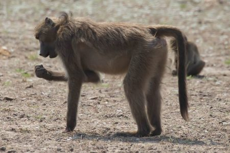 'I shot a whole family of baboons': Idaho Fish and Game official resigns amid fury over Africa trophy hunting boasts