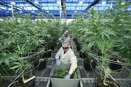 Marijuana becomes legal in Canada on Wednesday, but barriers remain for consumers