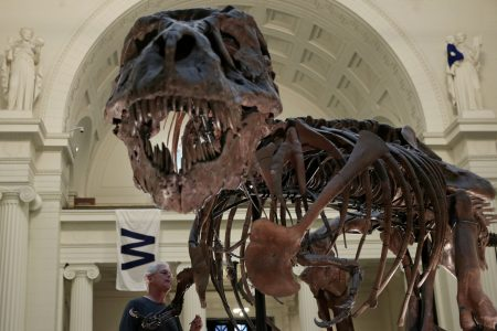 T. Rex's puny arms were useful after all