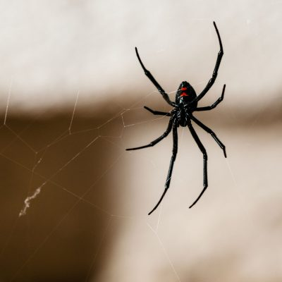Dozens of firefighters respond after man uses blowtorch to kill spiders, reports say