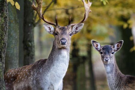 Warning to Michigan hunters: Test your deer for bovine tuberculosis