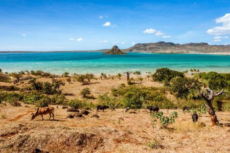 Long-standing Mystery of Human Arrival in Madagascar Solved With Extinct Animal Bones