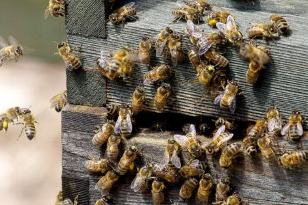 Save the bees: Mushroom extracts may help fight viruses that contribute to colony collapse disorder