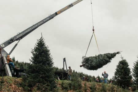 Real vs. Artificial Christmas Trees: What's the Greener Choice?