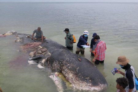 Dead whale had 115 plastic cups and 2 flip-flops in its stomach