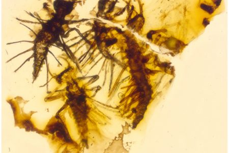 130-million-year-old insects trapped in amber right when they were born – Fox News