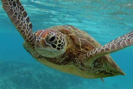 Microplastics found in gut of every sea turtle in new study – CNN