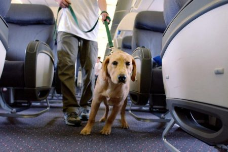 Delta bans puppies and kittens from all its flights – CNN
