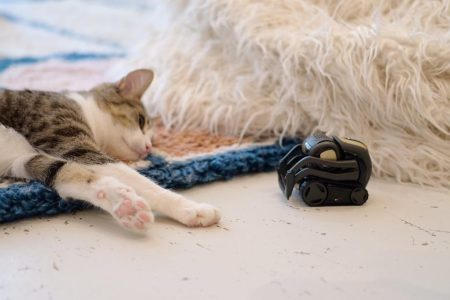 The very important reason these tiny robots are taking pictures of cats – CNN