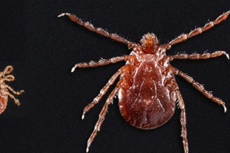 CDC warns of exotic ticks spreading across the nation that may carry diseases – USA TODAY