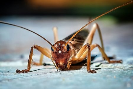 I ordered a box of crickets from the Internet and it went about as well as you'd expect – The Washington Post