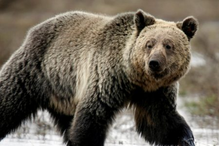 What's a bear market, and how long might it last? – CBS News