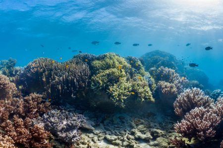 Scientists Find Some Hope for Coral Reefs: The Strong May Survive – The New York Times