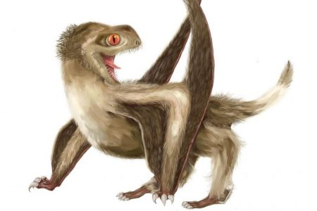 Extinct flying reptiles probably had feathers and fur, study says – ABC News