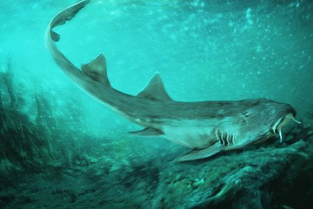 Shark with teeth shaped like 'Galaga' spaceships found next to T. rex – USA TODAY