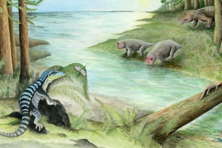 Meet the 'Antarctic king,' an unlikely fossil from 250 million years ago – CNN