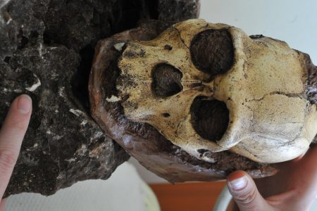 South African Fossils Are Human 'Missing Link,' Says New Study – HuffPost