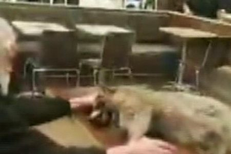Man walks into McDonald's with a dead raccoon – Fox News