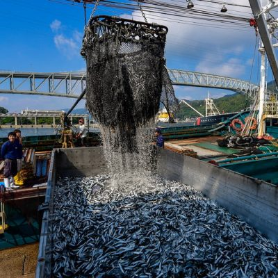 The World Is Losing Fish to Eat as Oceans Warm, Study Finds – The New York Times