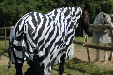 Scientists Dressed Horses Like Zebras to Figure Out Why They Have Stripes – Motherboard