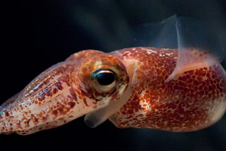 Squid Is the New Eco-Friendly Plastic, Study Says – Motherboard