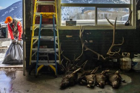 Hunters say it's not a 'zombie disease,' but they are worried about deer illness – NBC News