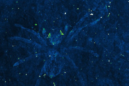 Researchers found spider fossils from 110 million years ago. The eyes still glowed – USA TODAY