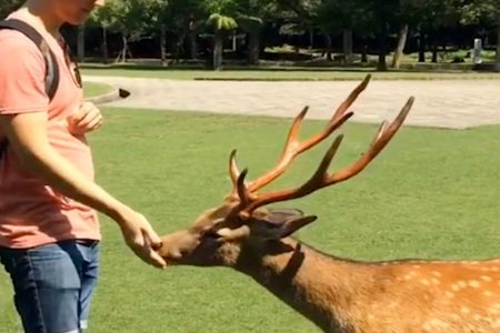 'Zombie deer disease' has now hit 24 US states. You could be eating infected meat without knowing it, one researcher warns. – Business Insider