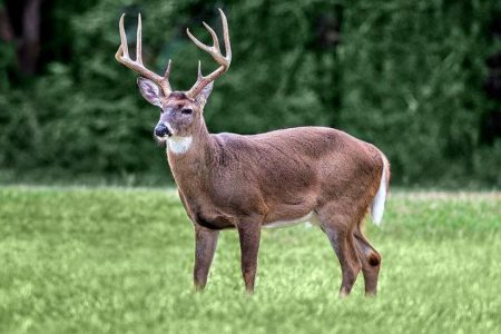 Deadly 'zombie' deer disease threat prompts Louisiana lawmaker to act: It's 'critical' to find a cure – Fox News