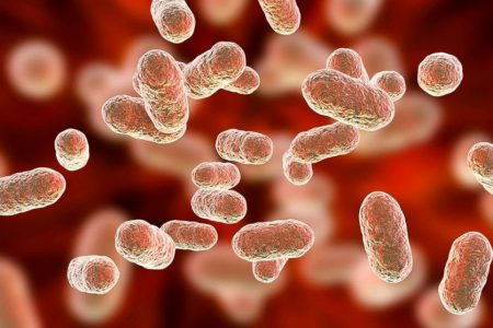 How the bacteria in your gut affect your mind and body – ABC News
