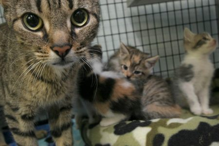 'Kitten cannibalism': Watchdog says government scientists fed cat and dog meat to felines in the lab – Washington Post