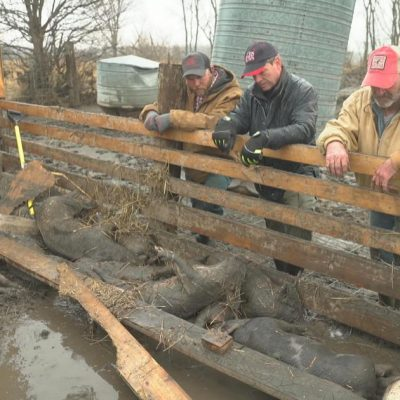 Midwest flooding: Farmers hit hard by deadly floodwaters react to devastating loss – CBS News